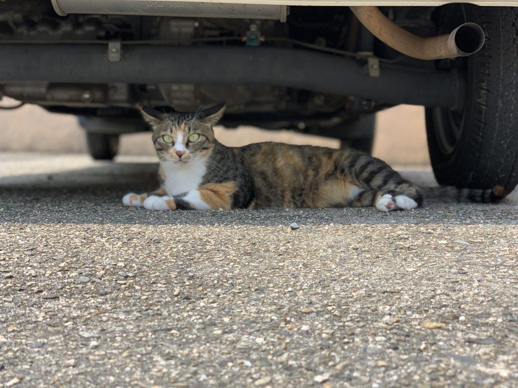 猫バンバン(夏)